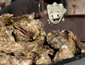 Oysterfest II - the sequel